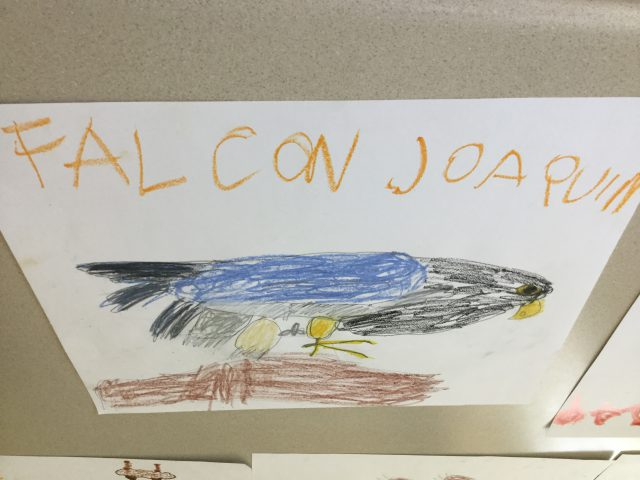 This is a Pastel Falcon using Oil pastels, wax, and jumbo crayons