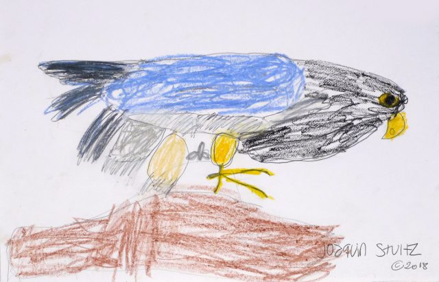 Falcon in crayons (7/24)