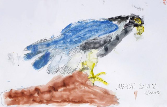 Falcon in watercolor (7/24)