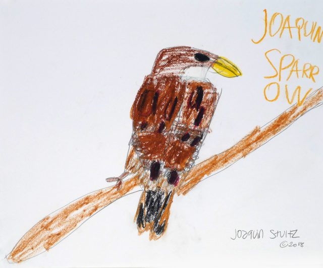 Sparrow in crayons (7/25)